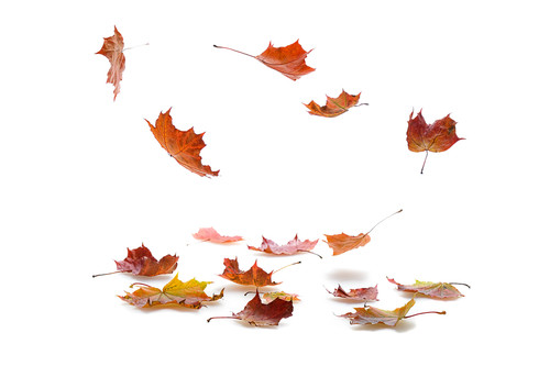Falling-autumn-leaves-137881970.jpg